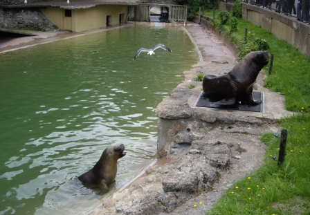 Sept 1 - Sea Lion Enclosure Dudley Zoo  © Antony N Britt
