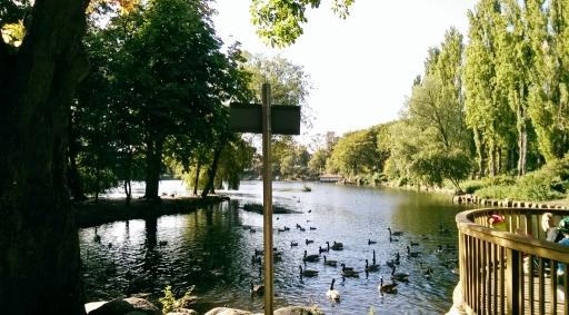 November 10 - Walsall Arbouretum Pool (1024x567)